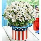 Uncle Sam White Daisy Mum Plant