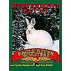 Peppermint Patty Gourmet Coffee