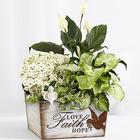 Peaceful White Garden Sympathy Plant with Angel Pick