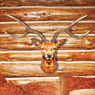 Backlit Deer Head Wall Lamp