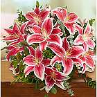 Stunning Pink Lily Bouquet