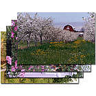 Door County Flower Greeting Cards