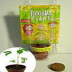 TickleMe Plant Mini Greenhouse Party Favor