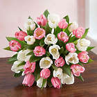 30-Stem Sweet Spring Tulip Bouquet