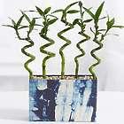 Shibori Spiral 5 Bamboo Stalks