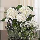 Tranquil White Garden Flower Arrangement for Sympathy