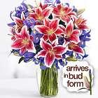 Deluxe Birthday Spectacular Stargazer Lilies Bouquet