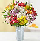 20 Stems Peruvian Lilies with French Flower Pail