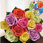 Congratulations Assorted Rose Bouquet