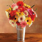 Happy Gerbera Daisies with French Flower Pail