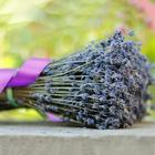 French Provence Romantic Dried Grosso Lavender Bunches