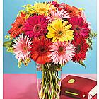 Colorful Gerbera Daisy Bouquet