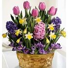 Blooming Basket of Bulbs and Gardening Gloves
