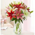 Valentine's Day Lovely Lilies