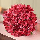 Valentine's Day Peruvian Lilies
