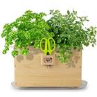 Homegrown Gourmet Cedar Window Box Planter with Herb Scissors