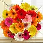 24 Happy Gerbera Daisies Bouquet
