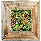 Succulent Wall Planter Kit