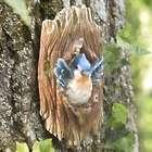 Happy Bluebird in a Tree Wall Art