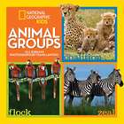 Animal Groups Book