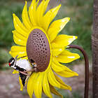 Sunflower Metal Bird Feeder Stake