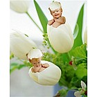 Personalized Tiptoe Tulips Photo