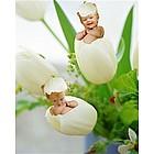 Personalized Tiptoe Tulips Photo