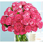 36 Pink Pearl Roses Bouquet