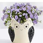 Mom's a Hoot Vase and Campanula Plant