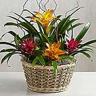 Deluxe Colorful Tropical Garden Flowers in Basket