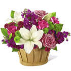 Fresh Focus Pink and Purple Deluxe Bouquet in Mini Basket