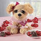 Sweetheart Puppy