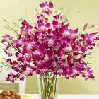 Purple Dendrobium Orchids Bouquet