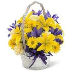 Spirit Of Spring Basket of Flowers
