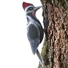 Pecking Woodpecker Iron Garden Sculpture