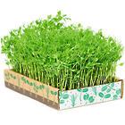 Green Living Grow Box