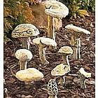Mushroom Collection Garden Decor
