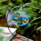 Marimo Aquarium Kit with Metal Stand