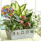 Happy Birthday Tropical Foliage Garden