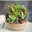 Small Cactus Dish Garden