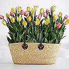 Farmer's Market Tulips in Market Bag
