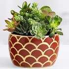 Autumn Jewel Succulents