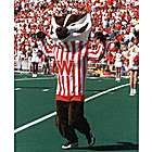 Photograph of Bucky Badger
