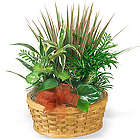 Medium Planter Basket of Green Plants