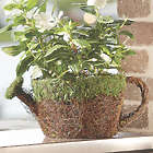 Watering Can Faux Moss Planter