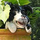 Ceramic Dog Potted Plant Buddy