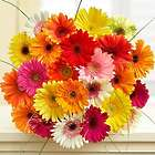 24 Stems of Happy Gerbera Daisies and Vase