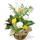Cheery Basket Planter