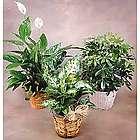 Individual Green Plant Gift