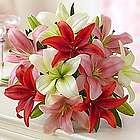 Valentine's Day Lilies Bouquet